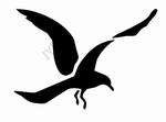 Vogel 22